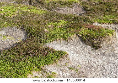 colorful heath vegetation seen around Pointe de Pen-Hir in Brittany France