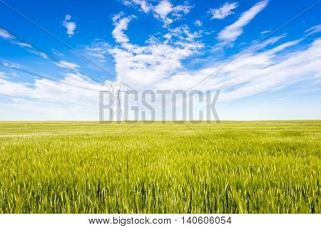 Wheat, triticum, triticeae field with power poles on the horizon