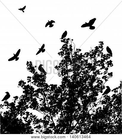 vector illustration of a tree background with birds