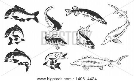 Set of river fish marks. River carp crucian carp perch pike catfish perch sturgeon. Design element for logo label emblem sign brand mark. Vector illustration.