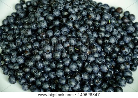 the gifts of nature in the summer black berry blueberries with a waxy coating