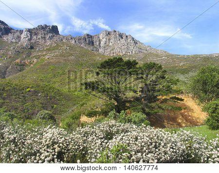 Chapmans Peak Area, Cape Town South Africa