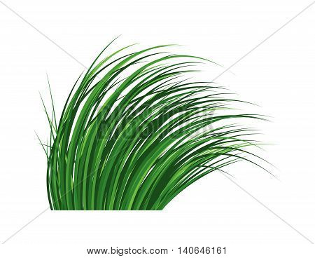 Green grass with earth crosscut. Grass earth green, nature, background