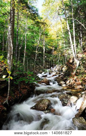 brook winding down the mountain forest in white mountain