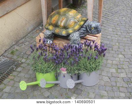Turtle And Lavender