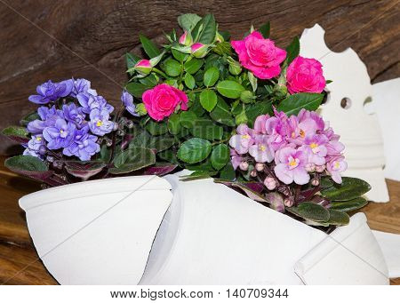 Roses And Viola Plants, Decoratet With Clay Shards.