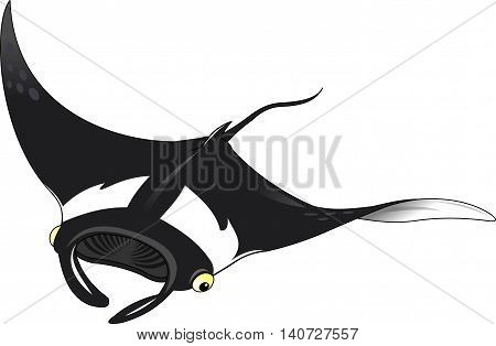 Black stingray on white background vector and illustration