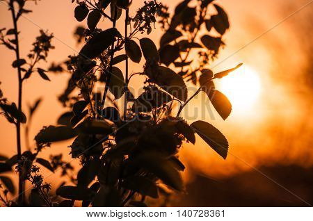 the rays of the sun THROUGH the BRANCHES at sunset