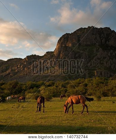 Herd of horses at sunset on a background of mountains. Wild west landscape.