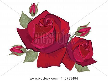 Red Rose isolated on white. Red rose. Vector rose flower for background greeting cards and invitations of the wedding birthday Valentine's Day Mother's Day.