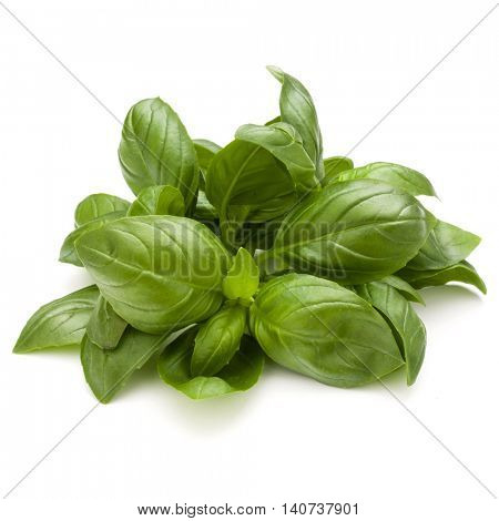 Sweet basil herb leaves bunch isolated on white background