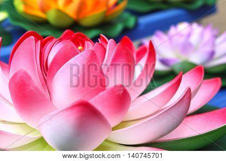 beautiful lotus flower of relaxation - lake plants