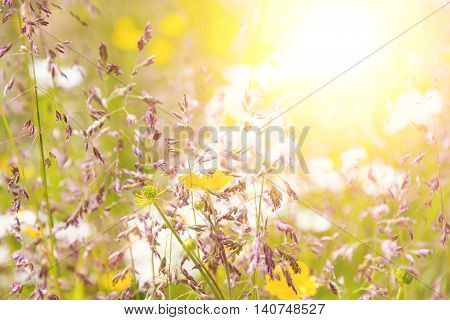 Wildflower in the morning with sunflare light. Blur background soft light