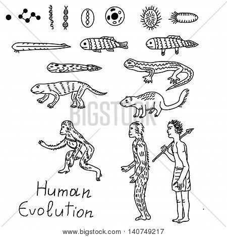 Evolution from atom to human vector simple illustration