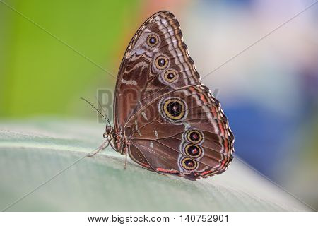 Colorful Butterfly closeup with mixed background colors