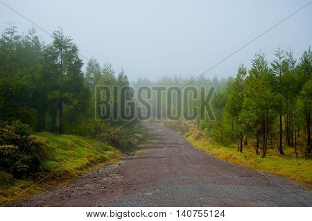 Misty morning scenery on top of the volcanic mountain of Monte Escuro in Sao Miguel Island of Azores