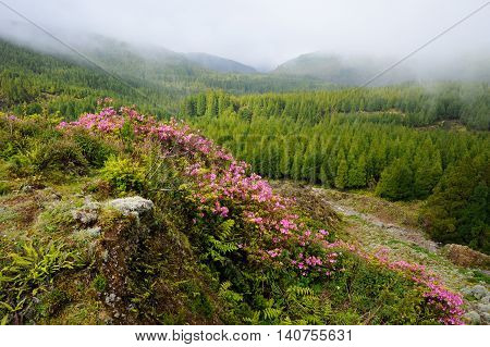 Flowers growing up on the peaks of Monte Escuro Mountain of Sao Miguel Azores