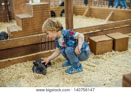 Boy Play With The Rabbits