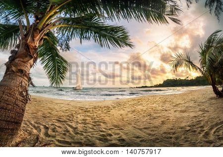 Tropical beach paradise at sunset with warm-colored sand palm trees beautiful clouds and a sailing boat