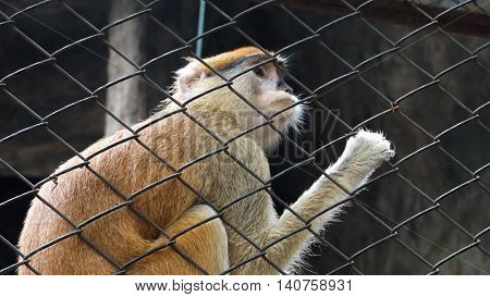 Monkey behind a gird in the zoo