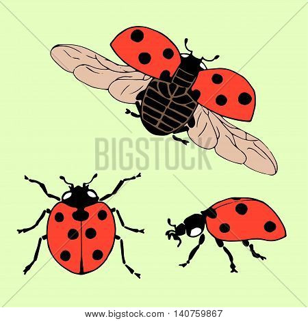 Vector set of ladybug in different positions. Hand drawing ladybug.