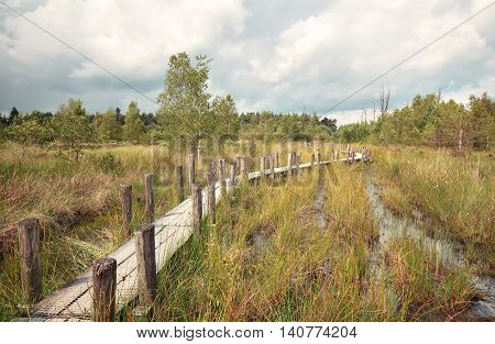 wooden road on swamp in summer Drenthe Netherlands