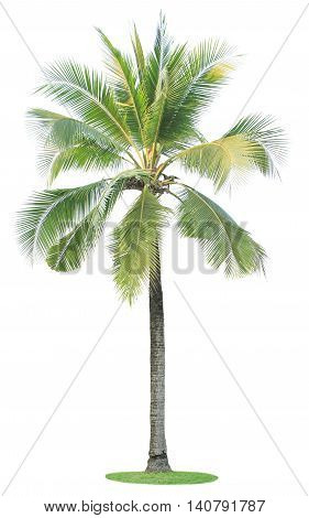 Singel coconut tree isolated on white background