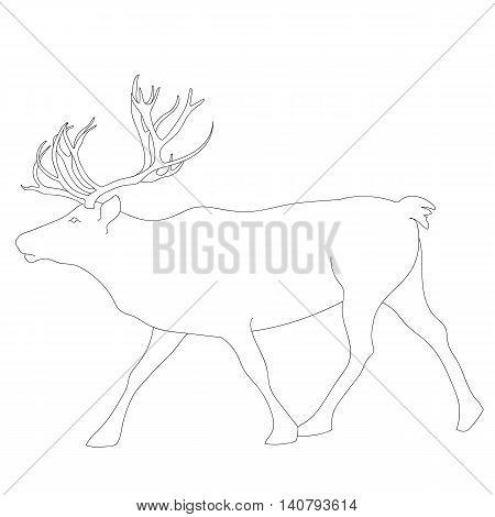 Graphical deer, stag, christmas deer, graphical deer, north deer, hand drawn deer, wild deer, vector deer.