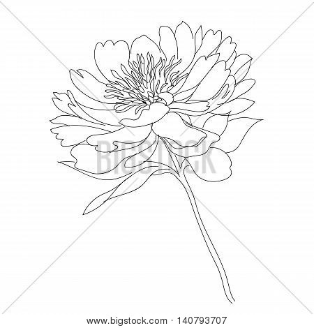 Graphical flower, blossom flower, decorative flower, monochrome flower, black flower, tatto flower, vector flower, silhouette flower, hand drawn flower.