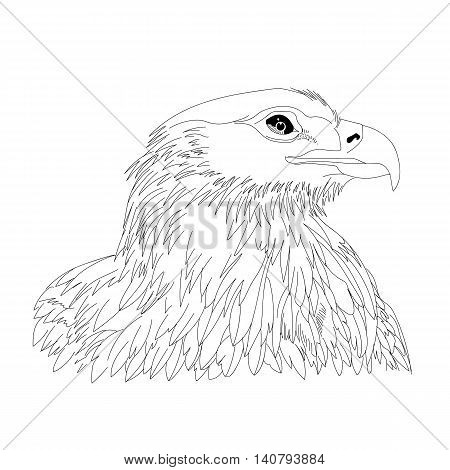 Graphical hand-drawn eagle, hawk, falcon. Eagle bird, eagle graphic, eagle freedom, eagle image, eagle head, eagle tattoo, eagle sketch, eagle icon. Vector.