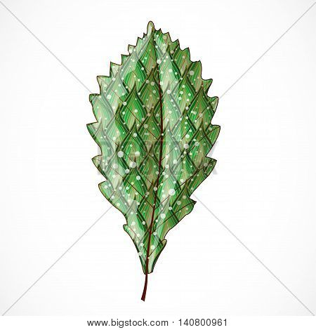 Vector illustration with abstract colorful leaf. Illustration 10 version