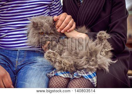 Cat Is In The Hands Of Men And Women