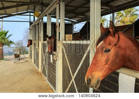 A Brown horse stand in a stable