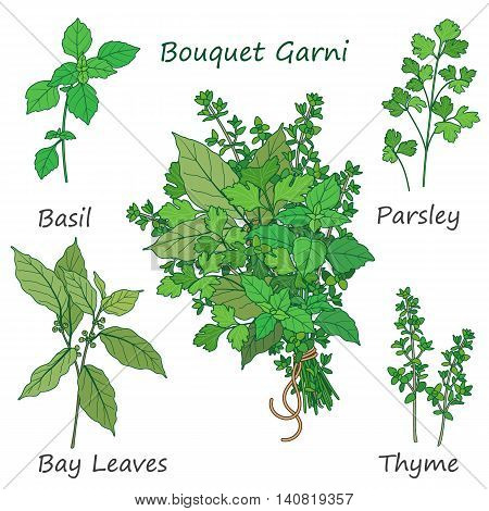 Bouquet garni of thyme bay leaves parsley and basil tied with a string. Bundle of flavoring green herbs isolated on white.