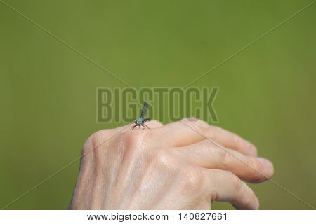 a dragon fly sitting on a hand