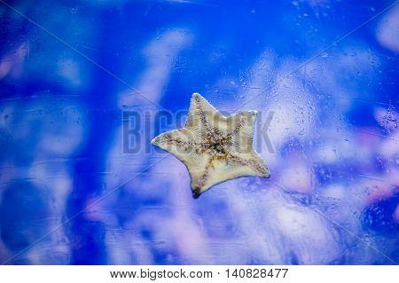 Starfish On Wall Aquarium
