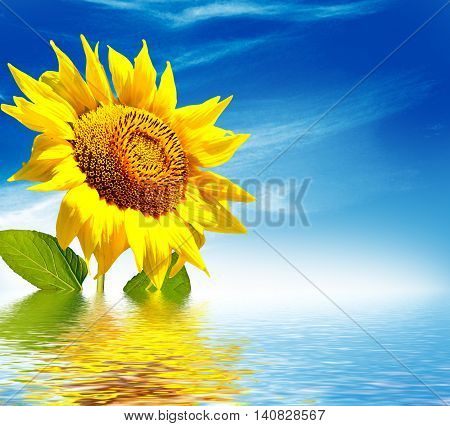 Beautiful sunflower field in summer. yellow flowers. blue sky