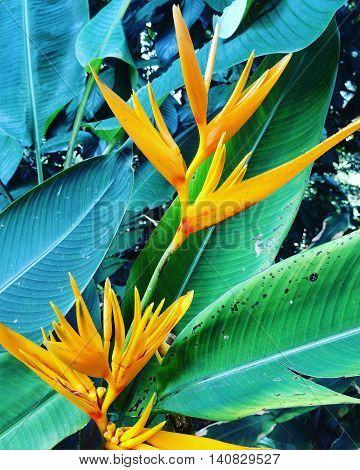 Flower in the Perdana Botanical Garden, Kuala Lumpur.