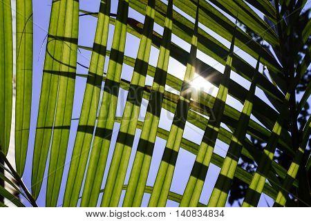 Sunlight Backlit Between Leaves