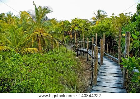 An elevated wooden foot path winding its way through the jungle of Tulum which is a resort town on Mexico's Caribbean coast around 130 km south of Cancún.