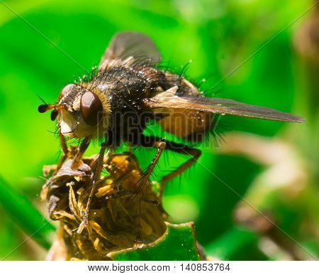 Detailed macro of big fly sitting in the grass