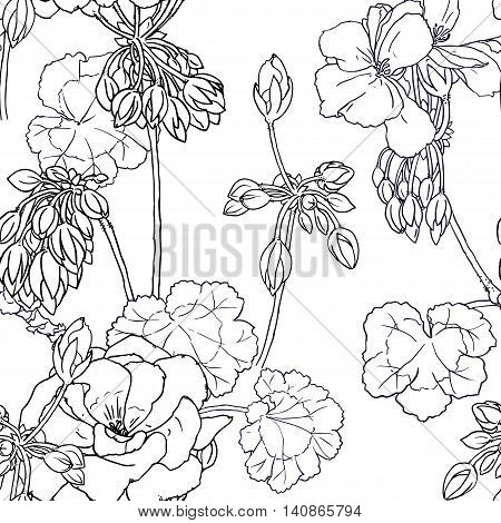 Hand drawn sketch illustration of geranium with flowers buds leaves. Contour graphic. Vector seamless pattern.