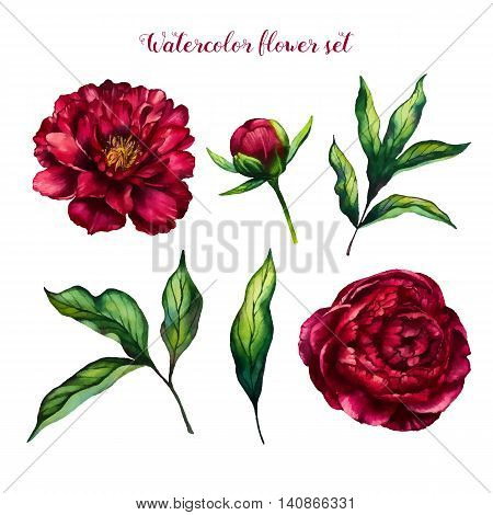 Watercolor flower peony flowers and leaves peonies watercolor rose isolated on white background floral set vector design for invitation wedding save the date card holiday summer design