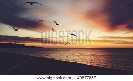 Vintage Sunset On A Beach With Seagulls