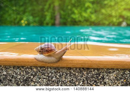 snail beside the swimmimg pool in raining day.