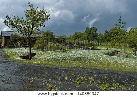 After hailstorm in one garden on South Africa