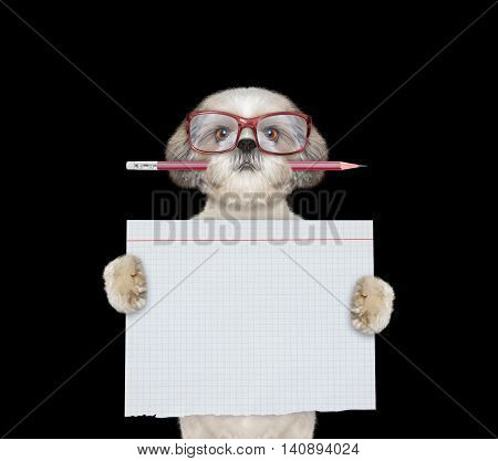 Cute dog studend at school holding piece of paper -- isolated on black