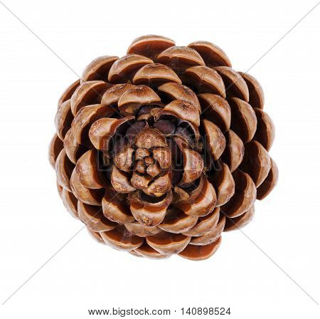 Pine cone closeup. Geometric conifer cone in the division Pinophyta that contains the reproductive structures, the seeds, that can be seen in the picture. Macro photo from above on white background.