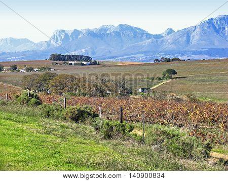 Farm, Stellenbosch, Western Cape, South Africa