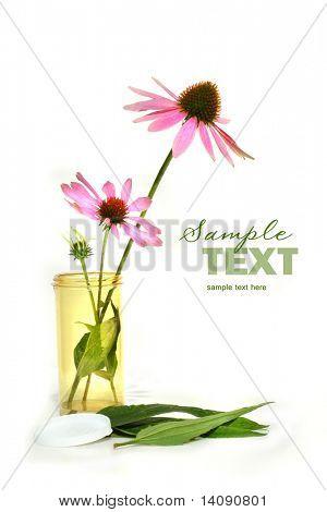 Echinacea cornflower in prescription container in white